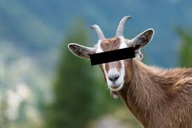 Image result for anonymous goat