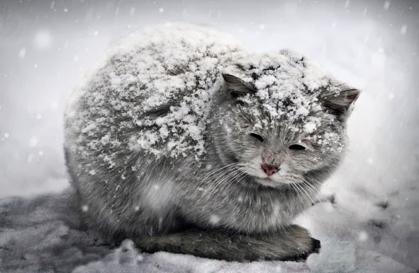 cats_cold_weather_m.jpg