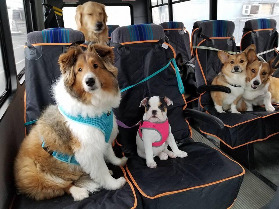 doggo bus.jpg