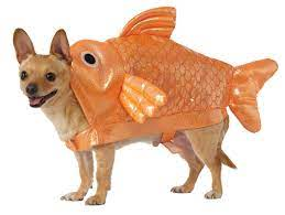 fishdog.jpg