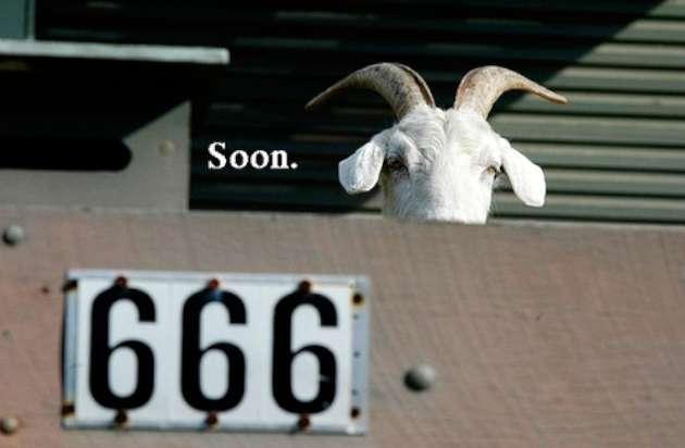 Funny-Goat-Memes-soon-W630.jpg