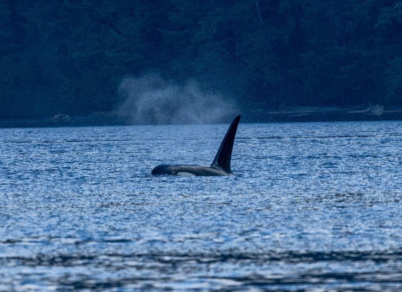 Orca2.jpeg