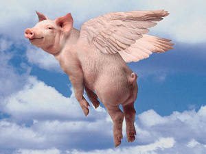 pigs flying pics.jpg
