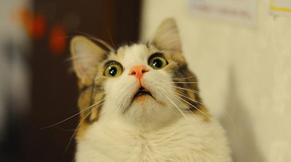 scaredy-cat-4.jpg