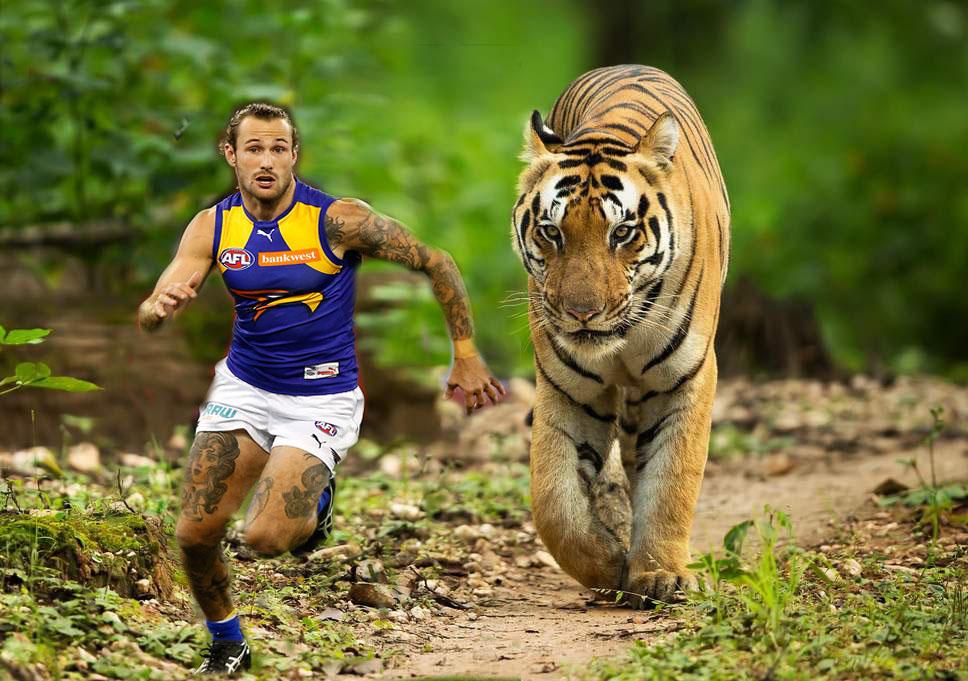 tiger-india.jpg