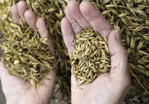 wheat-and-chaff.jpg